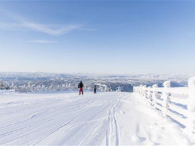 Kortuke på ski