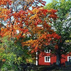 Trähus och ekar i höstfärger