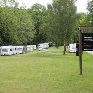 Campingplats, gräsplätt intill skog