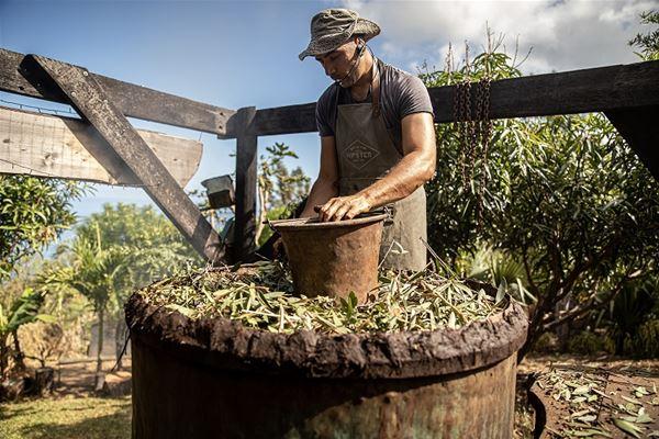 Du Jardin à l'Alambic - La fabrication péï d'une huile essentielle