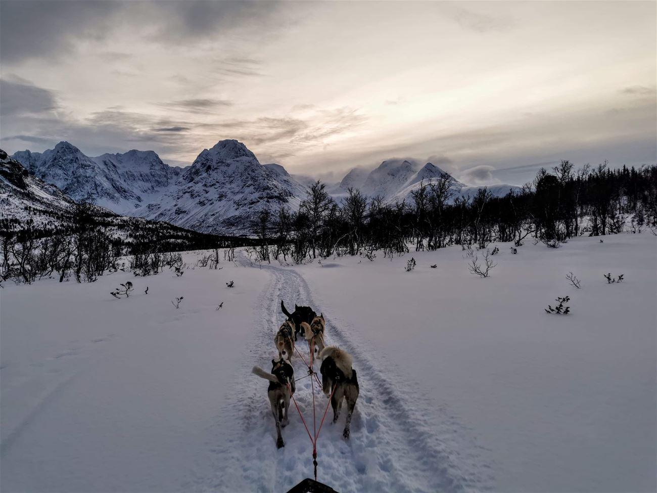Hundekjøring med Lyngen Safari © Svensby Tursenter
