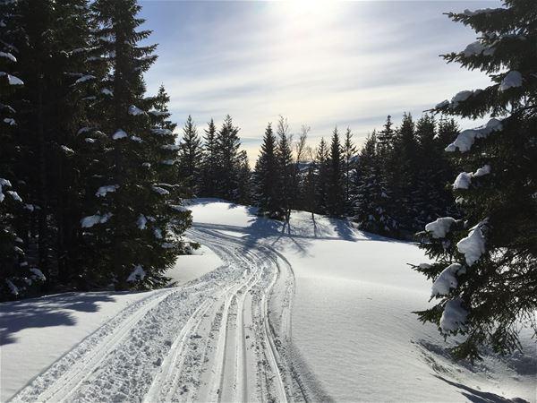 © Fjordbotn Camping, Skispor i solskinnsvær