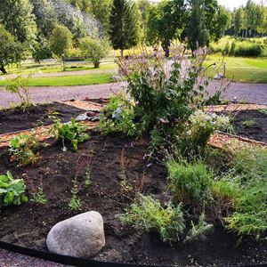 Blomsterarrangermang planterat på gårdsplanen.