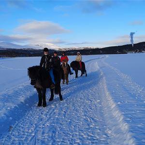 Fjällpilens Islandshästar, hundbutik & kennel