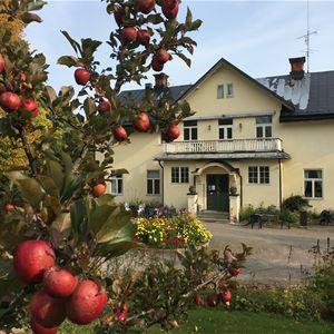 © Ann-Mari Lahnalampi, Ett äppelträd framför ett hus.
