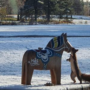 En ekorre som pussar en dalahäst.
