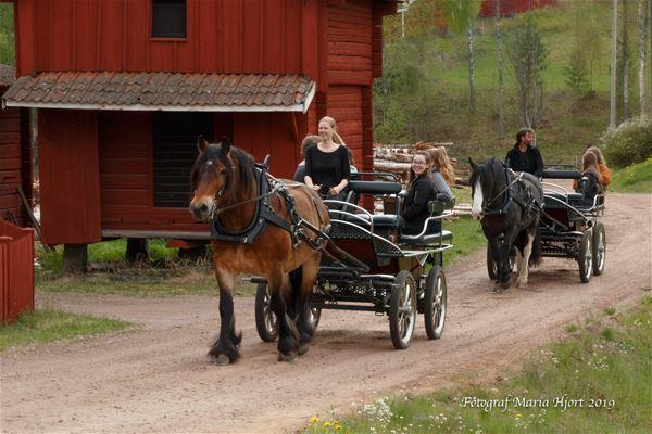 © Fotograf Maria Hjort, Hästskjuts i sommarsol.