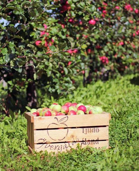 Apple Safari at Öfvergårds