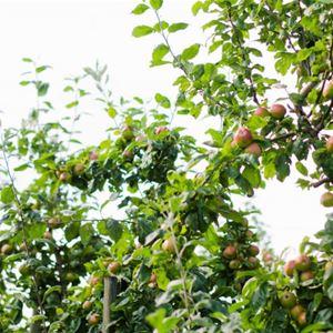 Vierailu Snäckö Fruktin omenatilan kesälaiturilla