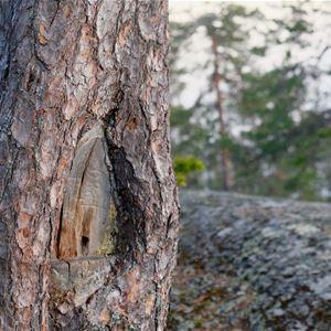 Naturguidning på Starrberget