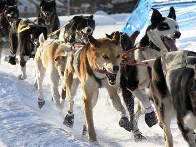 Dog Sledding and Northern Lights