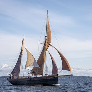 Heldagstur med Sunbeam runt Gräsö med goda chanser att se säl och sjöfågel