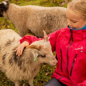 Moski Gård,  © Visit Narvik, Arctic Kids Summerfestiva