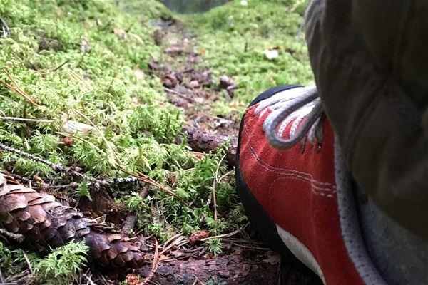 En vandringskänga i på en skogsstig med en kotte bredvid.