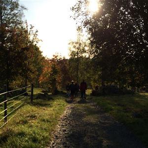 Fotograf ESpjuth2014, En vandringstig i skogen och solen lyser igenom grenar på träden.