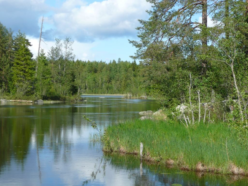 Forsa fiskevårdsområde
