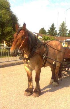 Storskogens hästturer,  © Storskogens hästturer, Storskogens hästturer