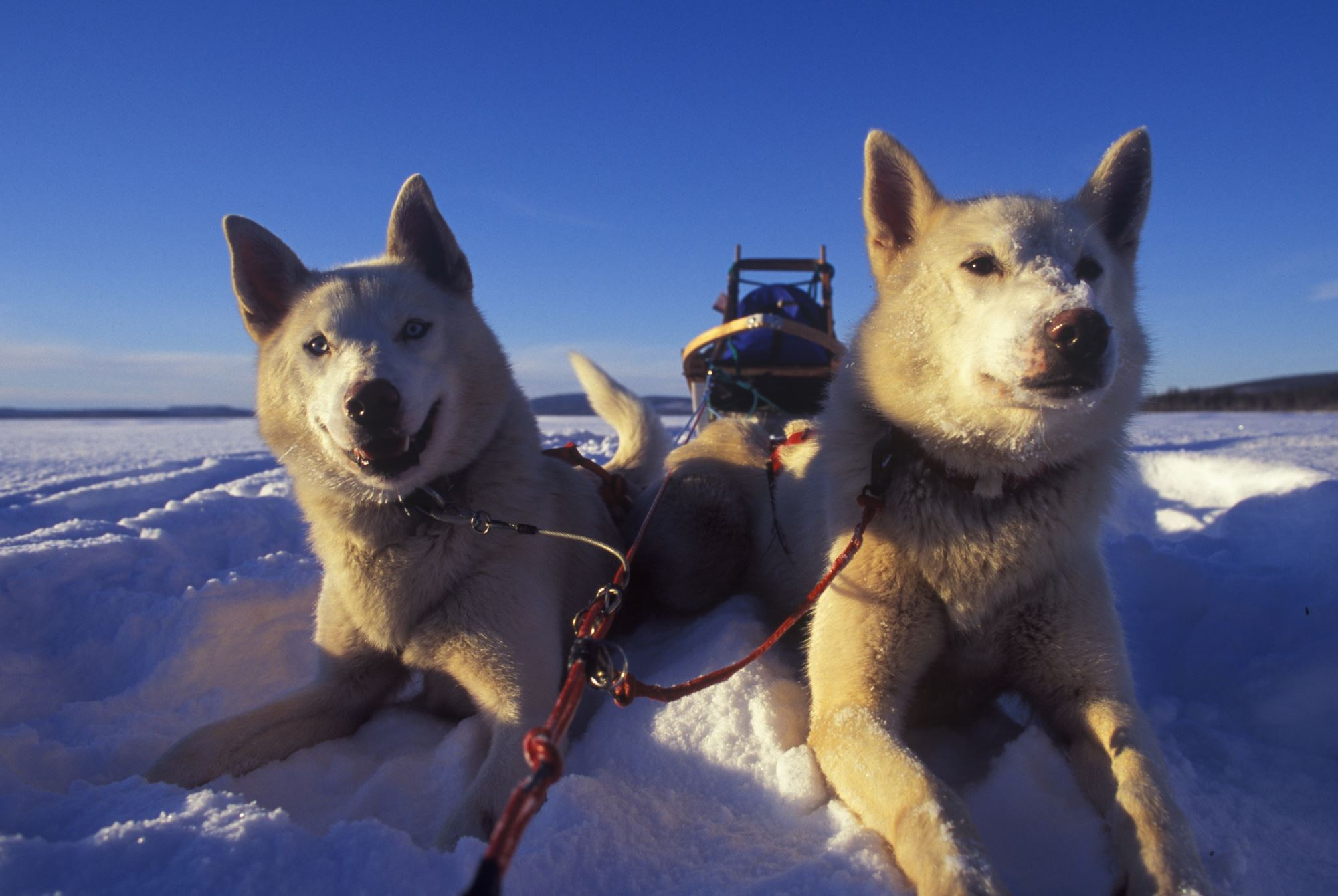 Wake Up and see the Arctic – Arctic Adventure Tours
