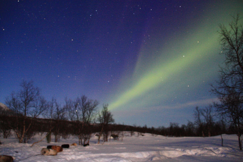 Hundesledekjøring under Nordlyset - Arctic Adventure Tours