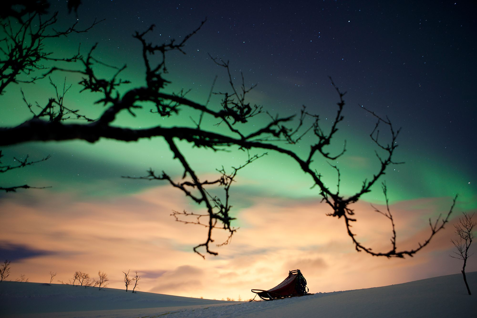 Hundesledetur i vinternatt - Tromsø Villmarkssenter