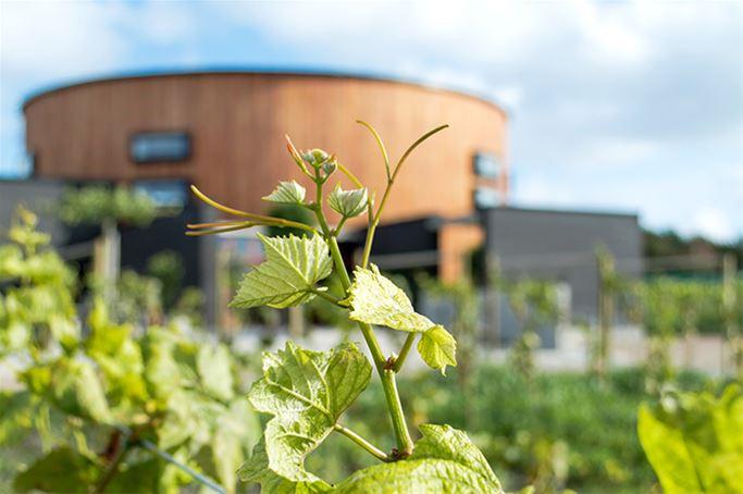 Vinprovning på Nordic Sea Winery