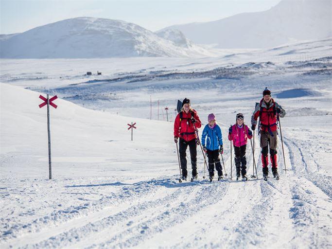Laponia - Familjefjällstur
