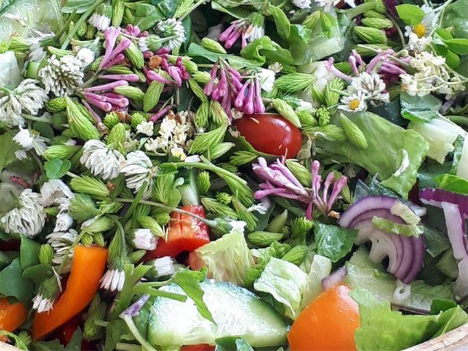 Upptäck hållbart på Lasätter gård